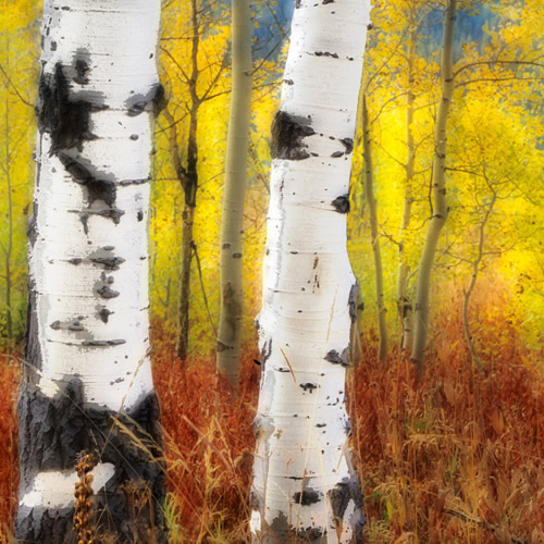 Carla Steckley, Aspens